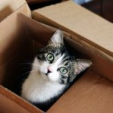 Relocating with Your Cat